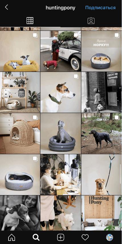 Товары для животных в Instagram