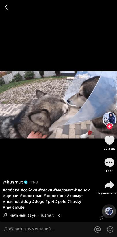 Видео с животными в ТТ